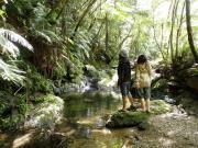 沖縄エコツアー・シーカヤック「がじゅまる自然学校」