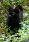 「猫写真外猫さん」