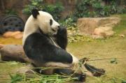 Kui の上海生活