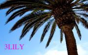 LA バイヤー 3LILYのファッションブログ