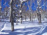 Shin's 北海道グルメ雪山ブログ