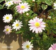 ゆたきうまの花とのんびり