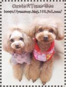 Cutie☆Yume+Neo