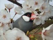 bird rui