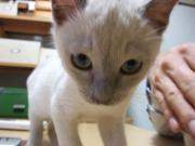 猫~kichiのブログ