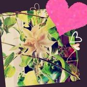 花ブロ de YU-KA