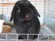 RabbitPastureBlog
