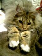 猫とミシン