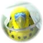 ハッピーケース 小鳥のアクリル鳥かごカバー