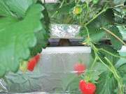 沖縄の日々と有機水耕栽培