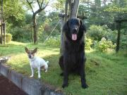 Lovely dog ルパン&ガーナ☆ラミー