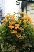 @patioの花飾りな日々