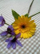 花のアトリエ ココリーネ