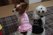 YUKI☆pon&LOCO☆tan 〜HAPPY LIFE〜