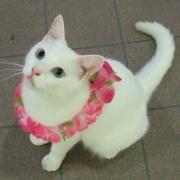白猫クミちゃんお散歩日記