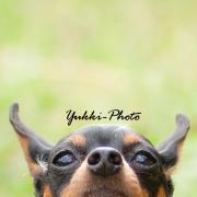 Yukki-photo