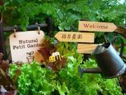 暇人主婦の家庭菜園