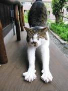 カロ猫店長さんのプロフィール