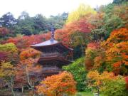 山寺のんびり日記