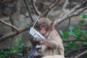 猿人への道