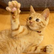 関西 猫カフェめぐりの日々