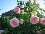 花と共に生きるフラワーレメディーフラワーメディスン