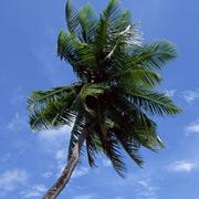 光輝く島スリランカ info-srilanka.net Blog