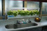 横浜で、野菜作り初心者が完全無農薬野菜を作る!