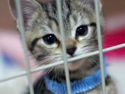 ユーチューブ猫の動画カワイイネコ画像