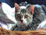 猫にマタタビ、私にエイゴ