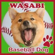 わさび音 wasabi-ne ♪柴犬わさびと音楽の日々♪