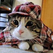 だいふくにっき@和猫かふぇ