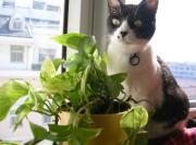 ポタジェ&ガーデン 犬猫日和