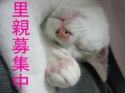 地域猫活動 Nねこの日誌