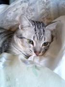 猫と私のどたばた日記