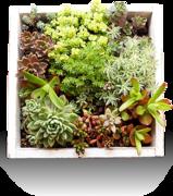 多肉植物に癒される人たちのブログ|petit-succulent