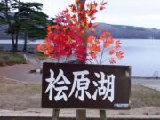 栃木のうどん屋のブログ