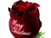 クリスマスストア公式ブログ