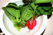 きゃろるのベランダ菜園
