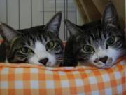 ホルンとピアノ 〜姉妹猫の優雅な日常〜
