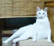 くるんママの日記(里親募集中の猫さんの預かり日記)