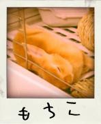 もちこブログ + いくら丼