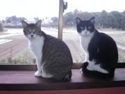 7匹の猫日記