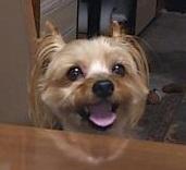 11歳と10日で天使になった愛犬りきの想い出ブログ