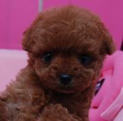 ワンワンCIAO! 犬博士ansonyのブログ