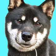 柴犬ペロォの毎日が紙芝居。
