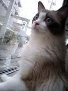 日々、猫の尻尾。されど日々是好日。