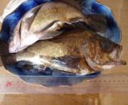ANGLERパゲの釣り日誌