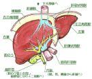 B型肝炎と精神病に勝つ