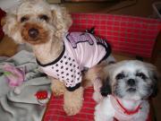 Moze & Migo & Me